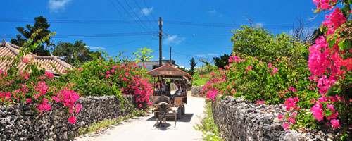 公式】石垣島ドリーム観光 |八重山の離島観光ツアーをご案内します